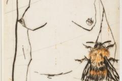 Abeilles, pointe sèche, 38x48, 2010